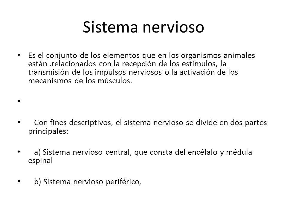 Sistema nervioso Es el conjunto de los elementos que en los organismos animales están.relacionados con la recepción de los estímulos, la transmisión de los impulsos nerviosos o la activación de los mecanismos de los músculos.