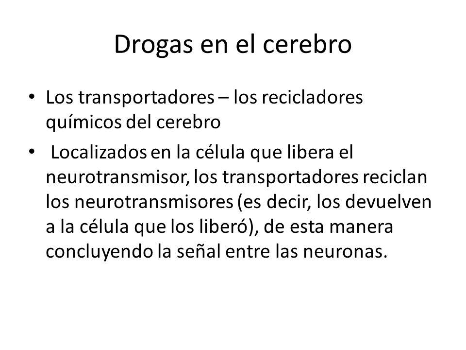 Drogas en el cerebro Los transportadores – los recicladores químicos del cerebro Localizados en la célula que libera el neurotransmisor, los transport