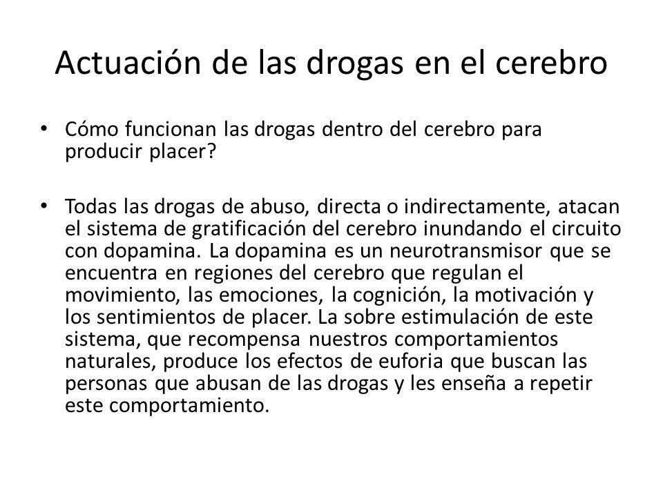 Actuación de las drogas en el cerebro Cómo funcionan las drogas dentro del cerebro para producir placer? Todas las drogas de abuso, directa o indirect