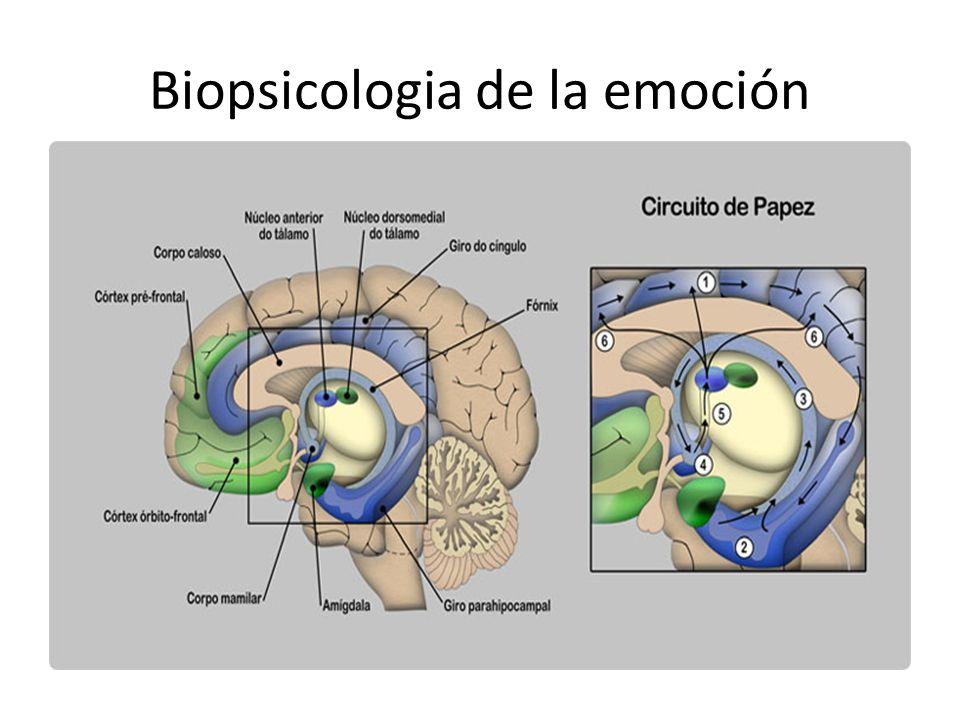 Biopsicologia de la emoción