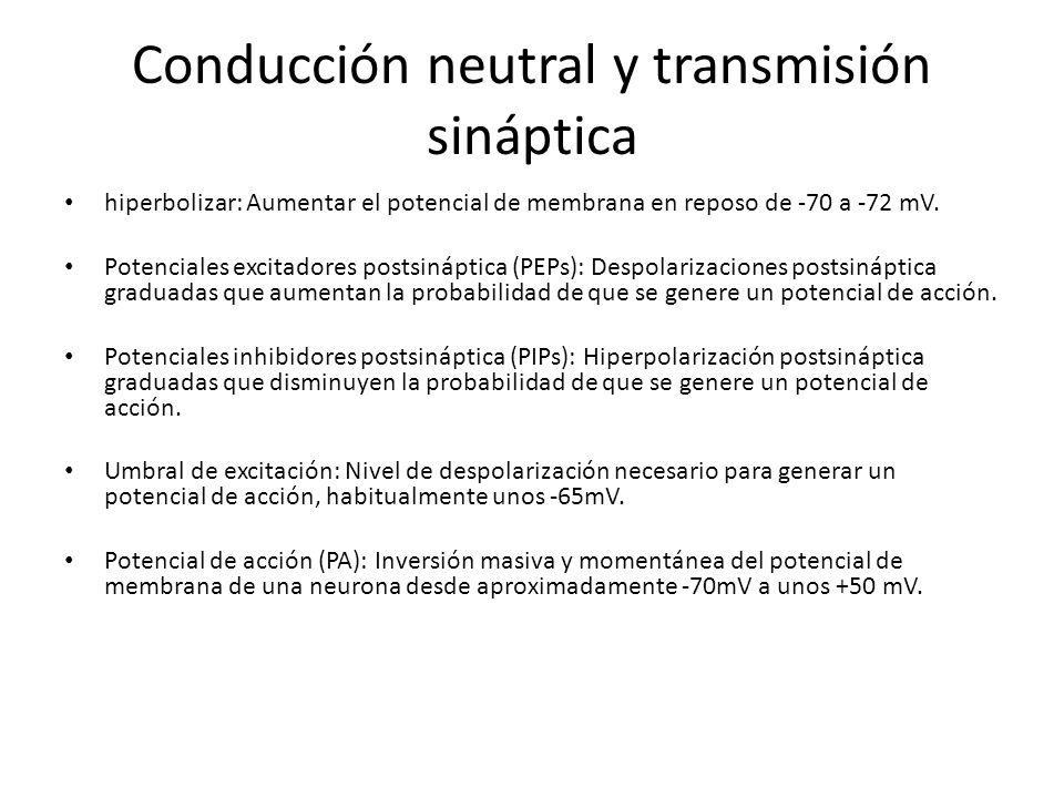 Conducción neutral y transmisión sináptica hiperbolizar: Aumentar el potencial de membrana en reposo de -70 a -72 mV. Potenciales excitadores postsiná