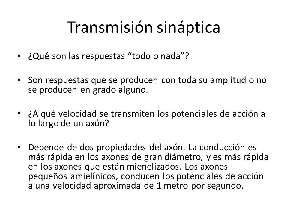 Transmisión sináptica ¿Qué son las respuestas todo o nada? Son respuestas que se producen con toda su amplitud o no se producen en grado alguno. ¿A qu