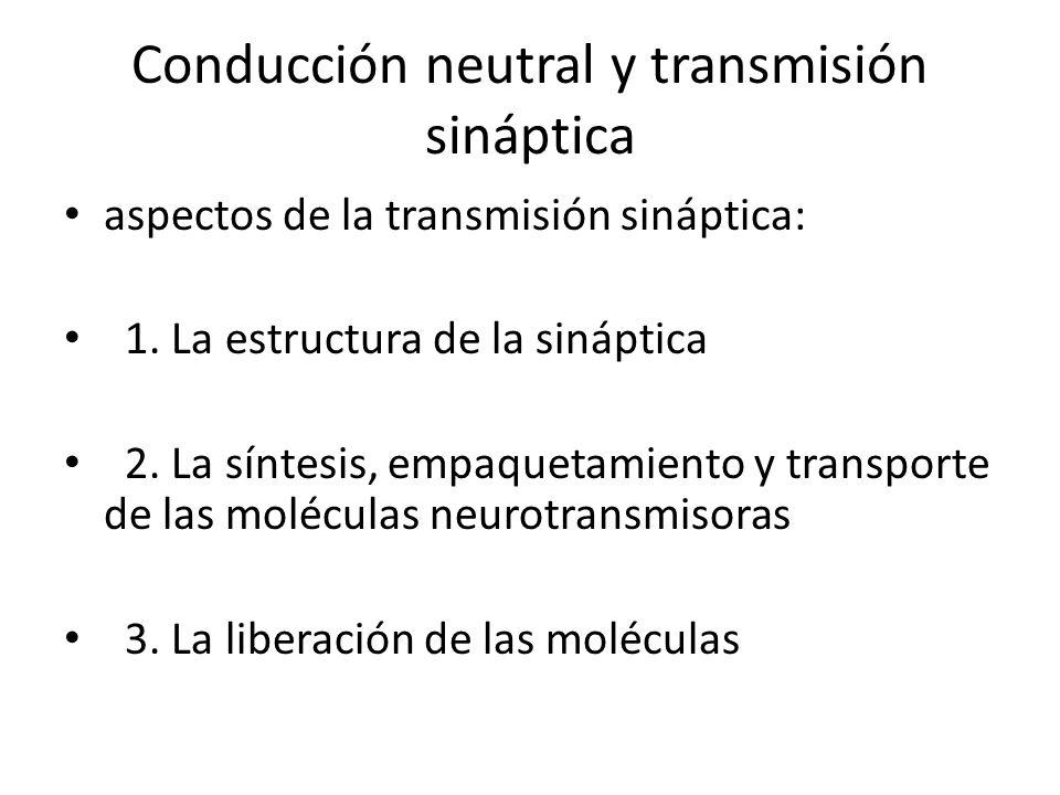 Conducción neutral y transmisión sináptica aspectos de la transmisión sináptica: 1. La estructura de la sináptica 2. La síntesis, empaquetamiento y tr