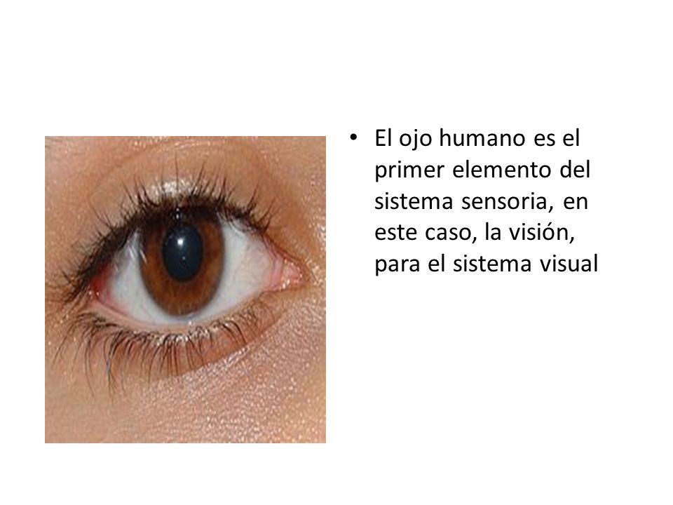 El ojo humano es el primer elemento del sistema sensoria, en este caso, la visión, para el sistema visual