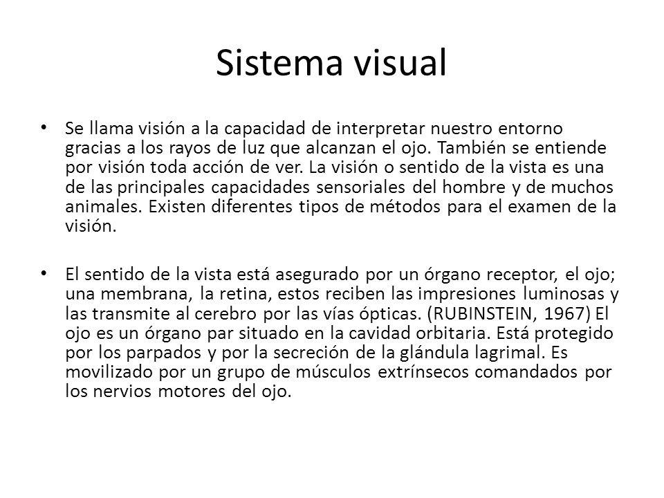 Sistema visual Se llama visión a la capacidad de interpretar nuestro entorno gracias a los rayos de luz que alcanzan el ojo. También se entiende por v