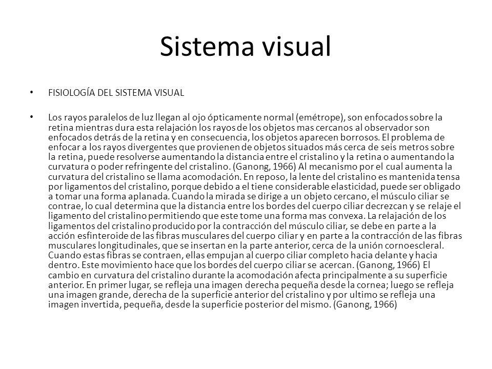 Sistema visual FISIOLOGÍA DEL SISTEMA VISUAL Los rayos paralelos de luz llegan al ojo ópticamente normal (emétrope), son enfocados sobre la retina mientras dura esta relajación los rayos de los objetos mas cercanos al observador son enfocados detrás de la retina y en consecuencia, los objetos aparecen borrosos.