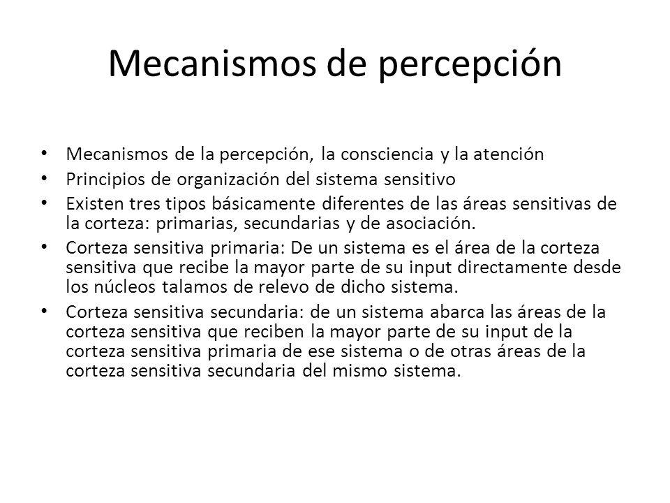 Mecanismos de percepción Mecanismos de la percepción, la consciencia y la atención Principios de organización del sistema sensitivo Existen tres tipos básicamente diferentes de las áreas sensitivas de la corteza: primarias, secundarias y de asociación.