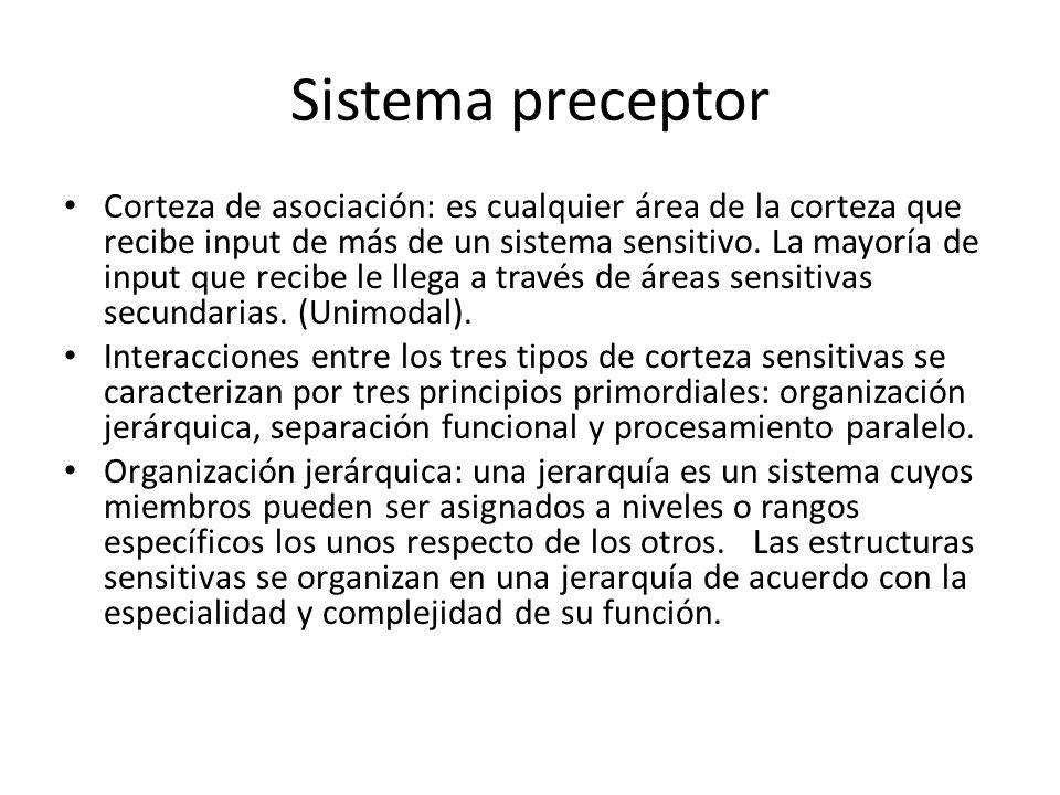 Sistema preceptor Corteza de asociación: es cualquier área de la corteza que recibe input de más de un sistema sensitivo. La mayoría de input que reci