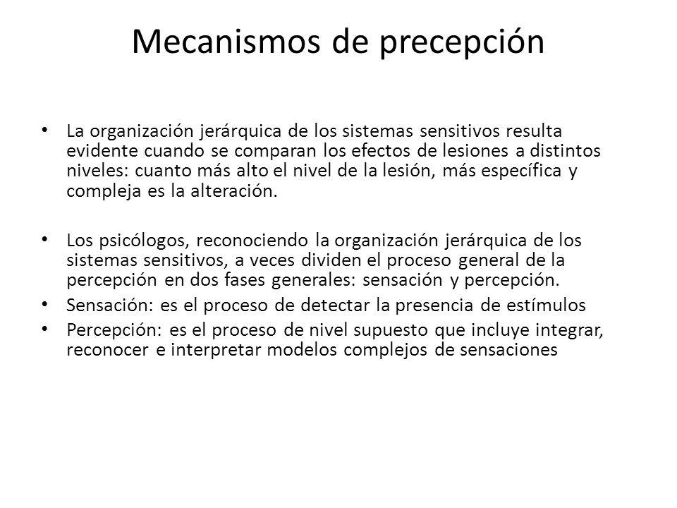 Mecanismos de precepción La organización jerárquica de los sistemas sensitivos resulta evidente cuando se comparan los efectos de lesiones a distintos