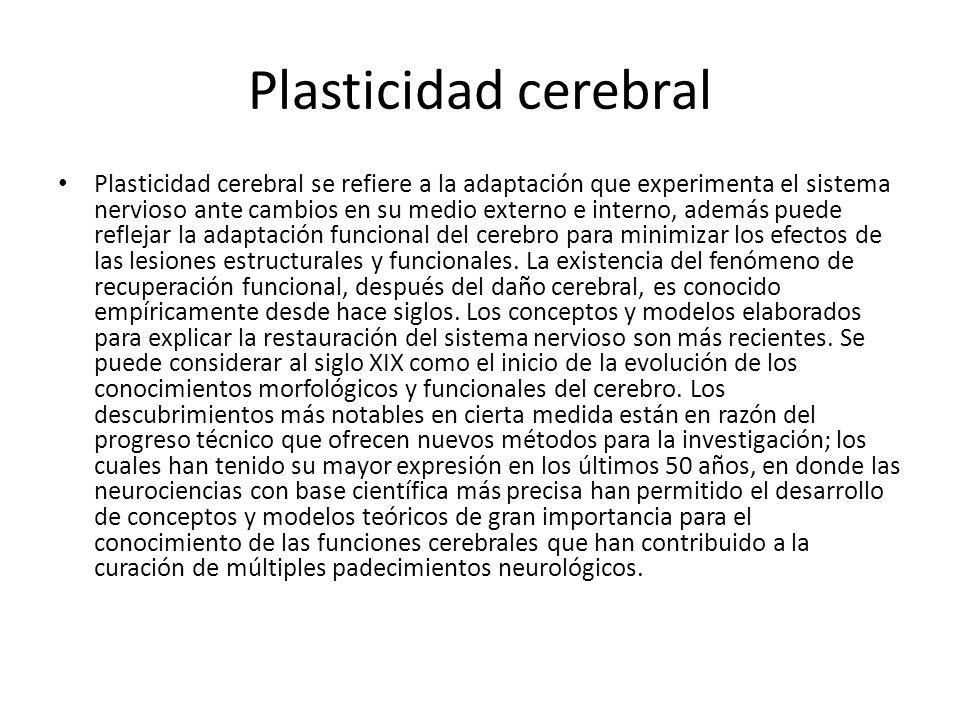 Plasticidad cerebral Plasticidad cerebral se refiere a la adaptación que experimenta el sistema nervioso ante cambios en su medio externo e interno, a