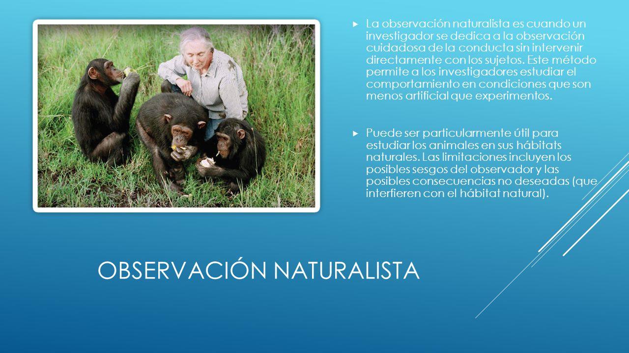 OBSERVACIÓN NATURALISTA La observación naturalista es cuando un investigador se dedica a la observación cuidadosa de la conducta sin intervenir directamente con los sujetos.