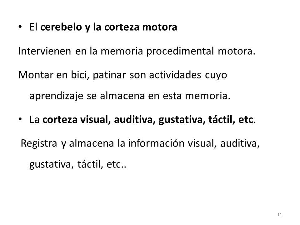 El cerebelo y la corteza motora Intervienen en la memoria procedimental motora. Montar en bici, patinar son actividades cuyo aprendizaje se almacena e