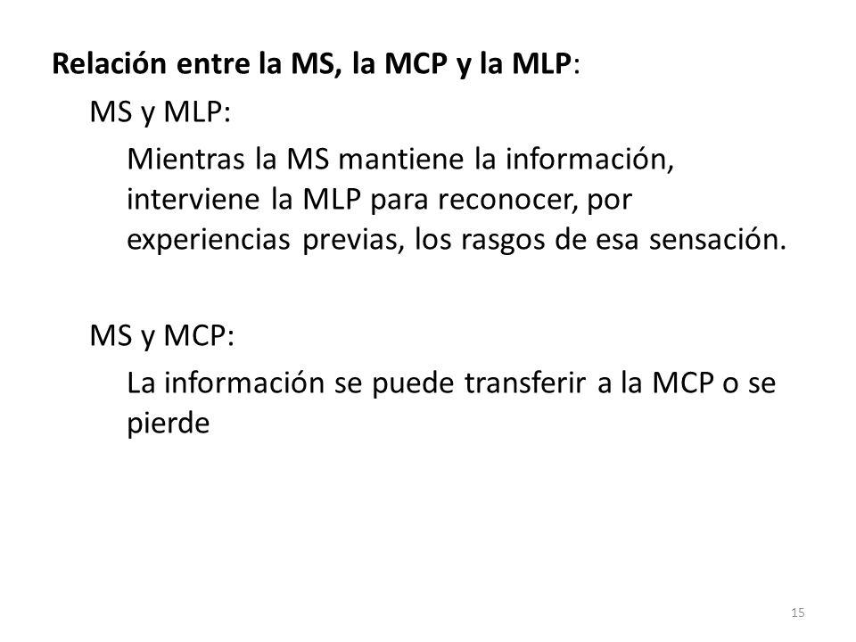Relación entre la MS, la MCP y la MLP: MS y MLP: Mientras la MS mantiene la información, interviene la MLP para reconocer, por experiencias previas, l