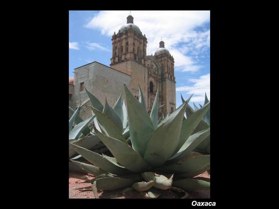 Los Cabos (Baja California)