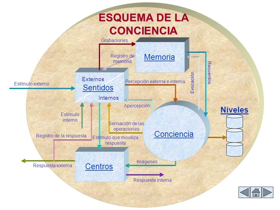 Centros Niveles Internos Externos Memoria ESQUEMA DE LA CONCIENCIA Imágenes Conciencia Estímulo externo Respuesta externa Respuesta interna Recuerdos