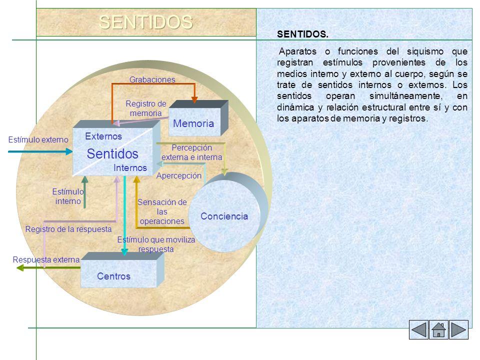 SENTIDOS. Aparatos o funciones del siquismo que registran estímulos provenientes de los medios interno y externo al cuerpo, según se trate de sentidos
