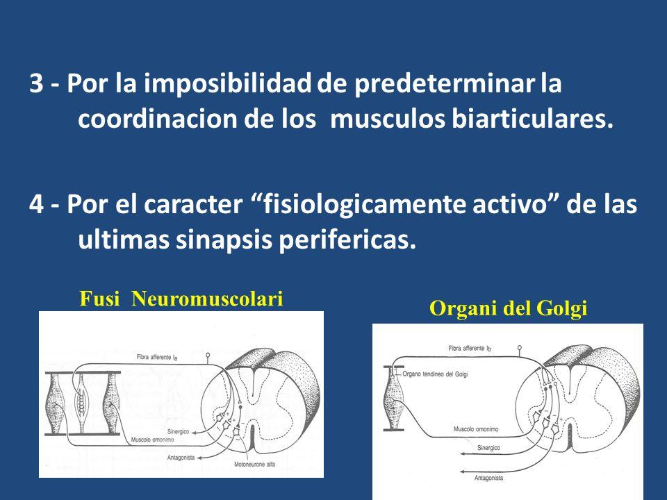 3 - Por la imposibilidad de predeterminar la coordinacion de los musculos biarticulares. 4 - Por el caracter fisiologicamente activo de las ultimas si
