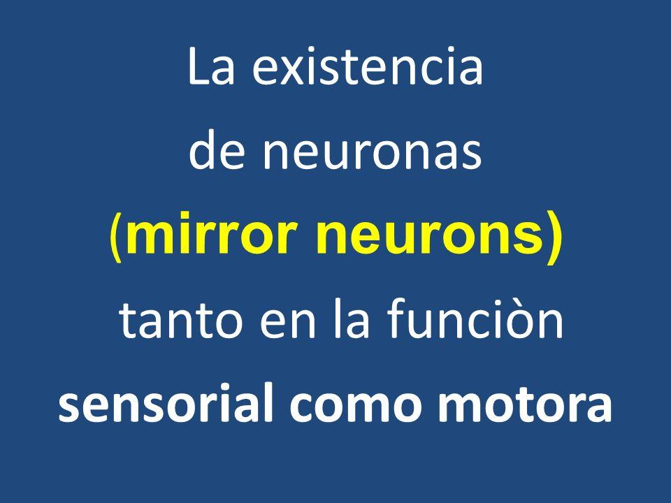 La existencia de neuronas ( mirror neurons) tanto en la funciòn sensorial como motora
