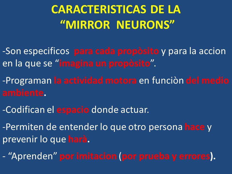 CARACTERISTICAS DE LA MIRROR NEURONS -Son especificos para cada propòsito y para la accion en la que se imagina un propòsito. -Programan la actividad