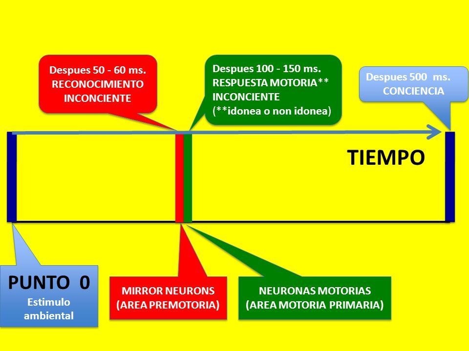 Despues 50 - 60 ms. RECONOCIMIENTO INCONCIENTE Despues 500 ms. CONCIENCIA Despues 500 ms. CONCIENCIA PUNTO 0 Estimulo ambiental PUNTO 0 Estimulo ambie