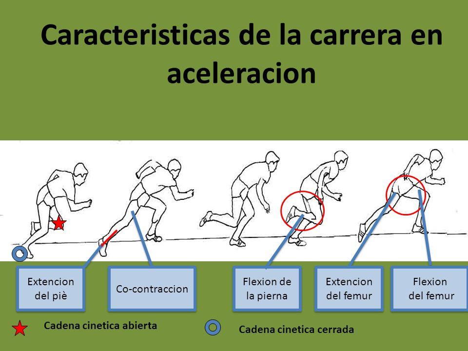 Caracteristicas de la carrera en aceleracion Cadena cinetica cerrada Cadena cinetica abierta Extencion del femur Extencion del piè Flexion de la piern