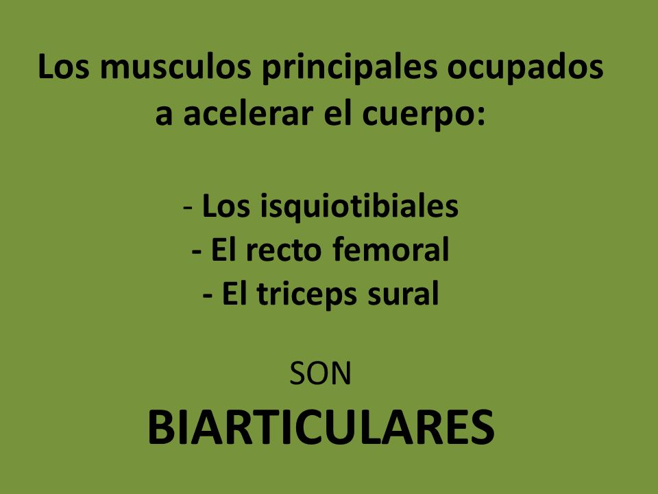 Los musculos principales ocupados a acelerar el cuerpo: - Los isquiotibiales - El recto femoral - El triceps sural SON BIARTICULARES