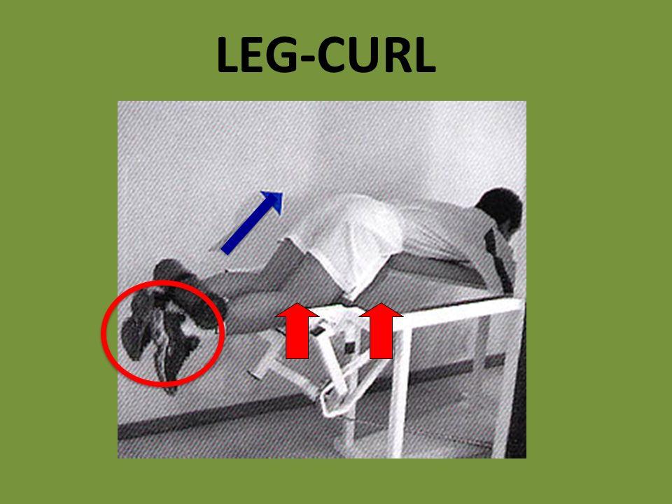 LEG-CURL