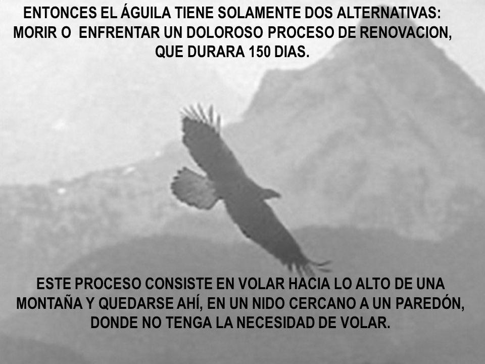 ENTONCES EL ÁGUILA TIENE SOLAMENTE DOS ALTERNATIVAS: MORIR O ENFRENTAR UN DOLOROSO PROCESO DE RENOVACION, QUE DURARA 150 DIAS.