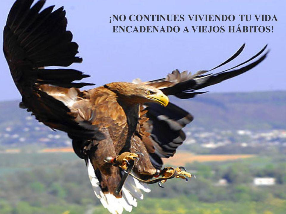 ¡NO CONTINUES VIVIENDO TU VIDA ENCADENADO A VIEJOS HÁBITOS!