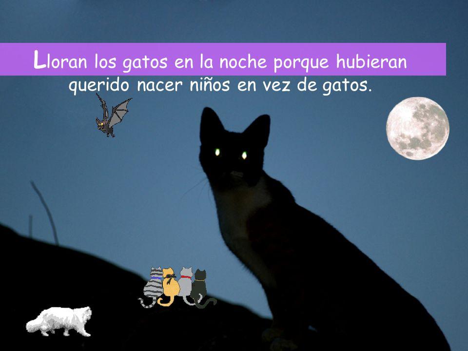L loran los gatos en la noche porque hubieran querido nacer niños en vez de gatos.