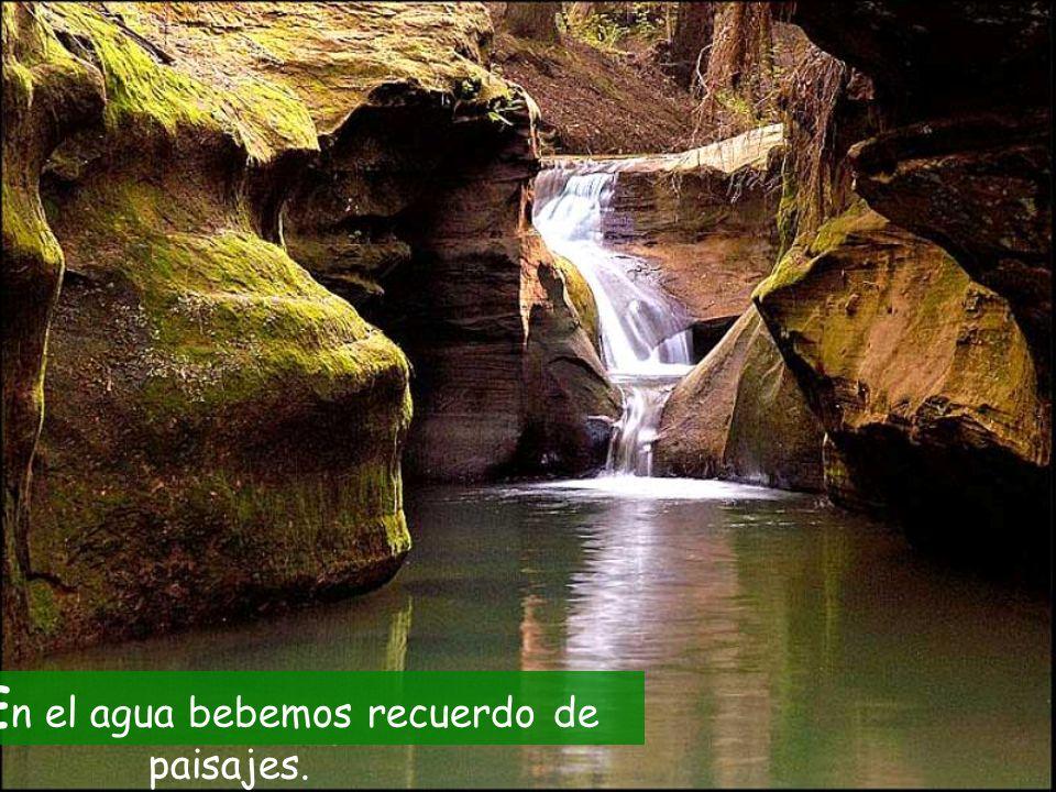 E n el agua bebemos recuerdo de paisajes.