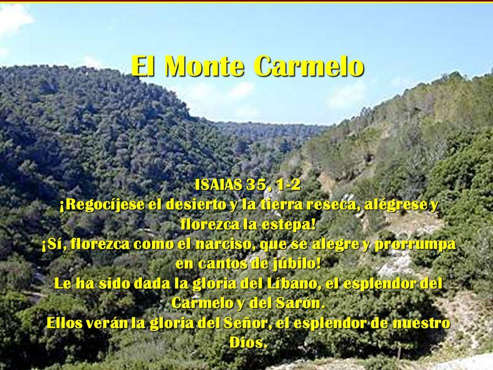 El Monte Carmelo ISAIAS 35, 1-2 ¡Regocíjese el desierto y la tierra reseca, alégrese y florezca la estepa! ¡Sí, florezca como el narciso, que se alegr