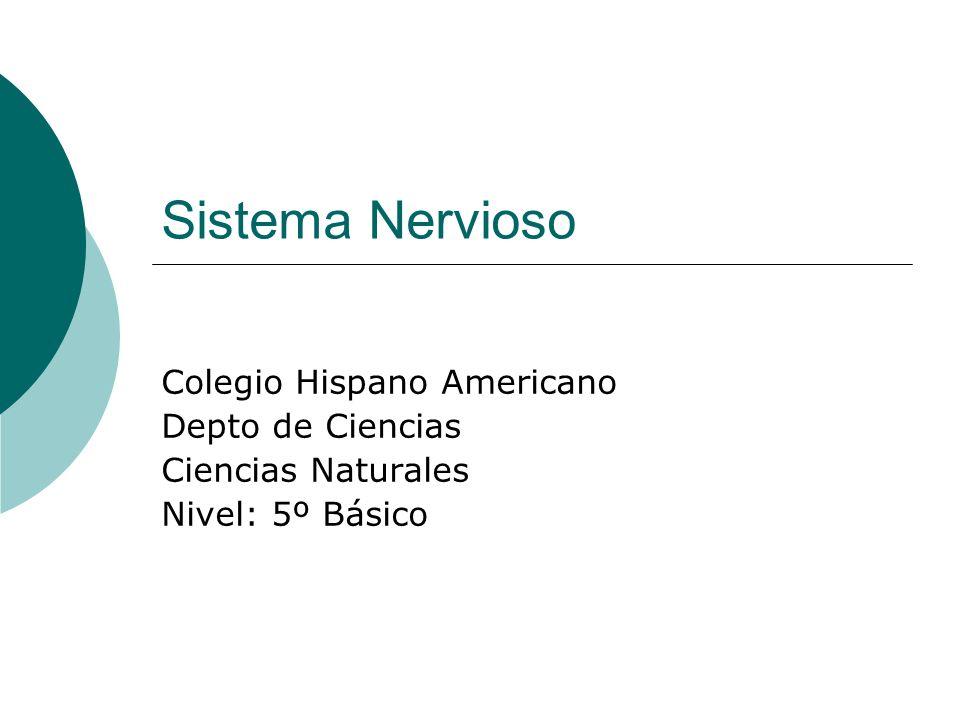 Sistema Nervioso Colegio Hispano Americano Depto de Ciencias Ciencias Naturales Nivel: 5º Básico