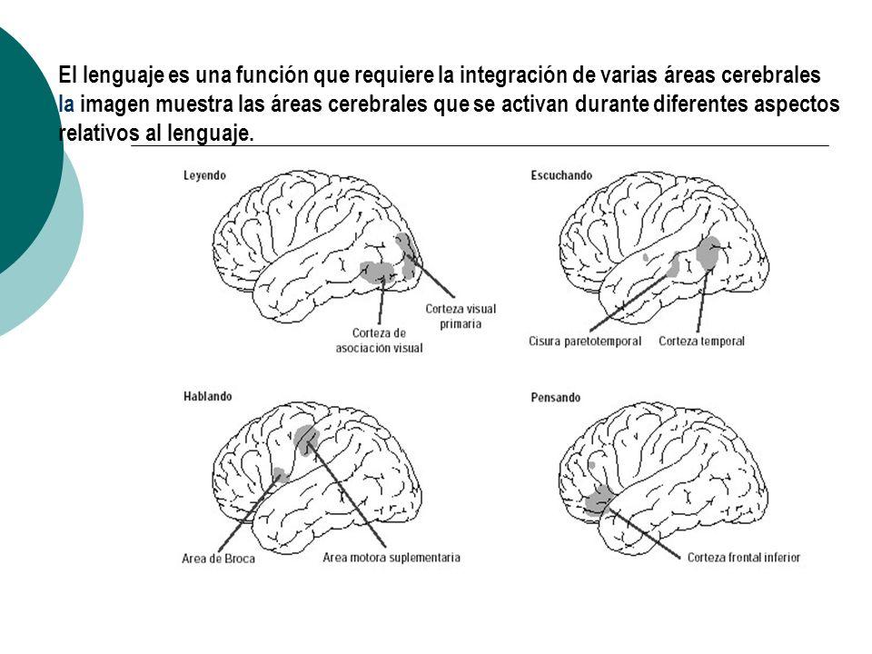 TEP de cerebro, obtenido mientras a la persona se le hace observar un dibujo TEP de cerebro, obtenido mientras a la persona se pide que mueva un pie