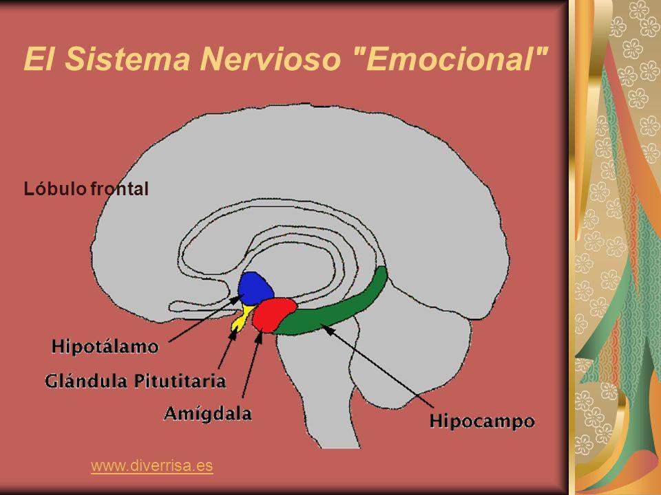 EMOCIONES BÁSICAS Existen 8 emociones básicas MIEDO: tendemos hacia la protección.