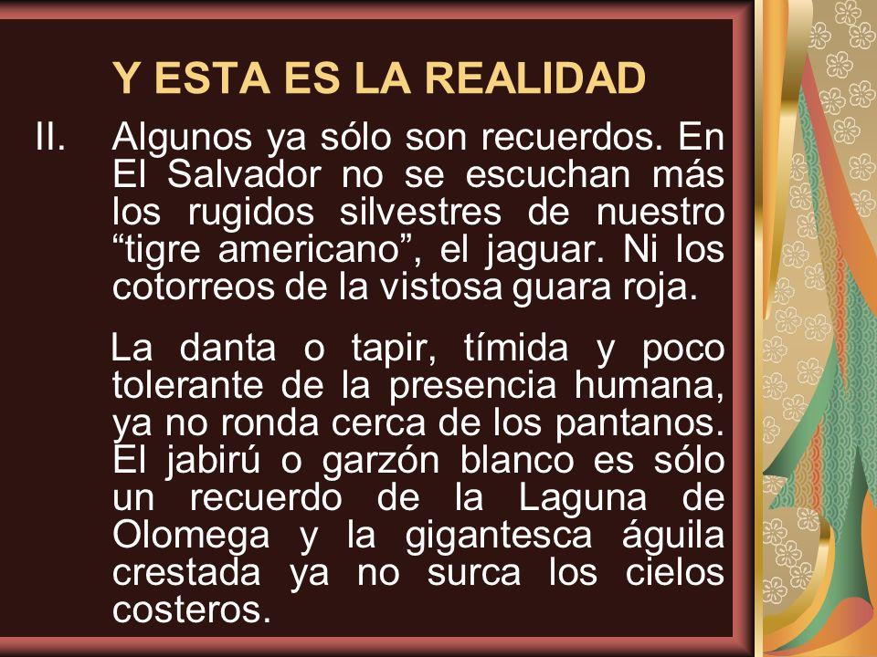 Y ESTA ES LA REALIDAD II.Algunos ya sólo son recuerdos. En El Salvador no se escuchan más los rugidos silvestres de nuestro tigre americano, el jaguar