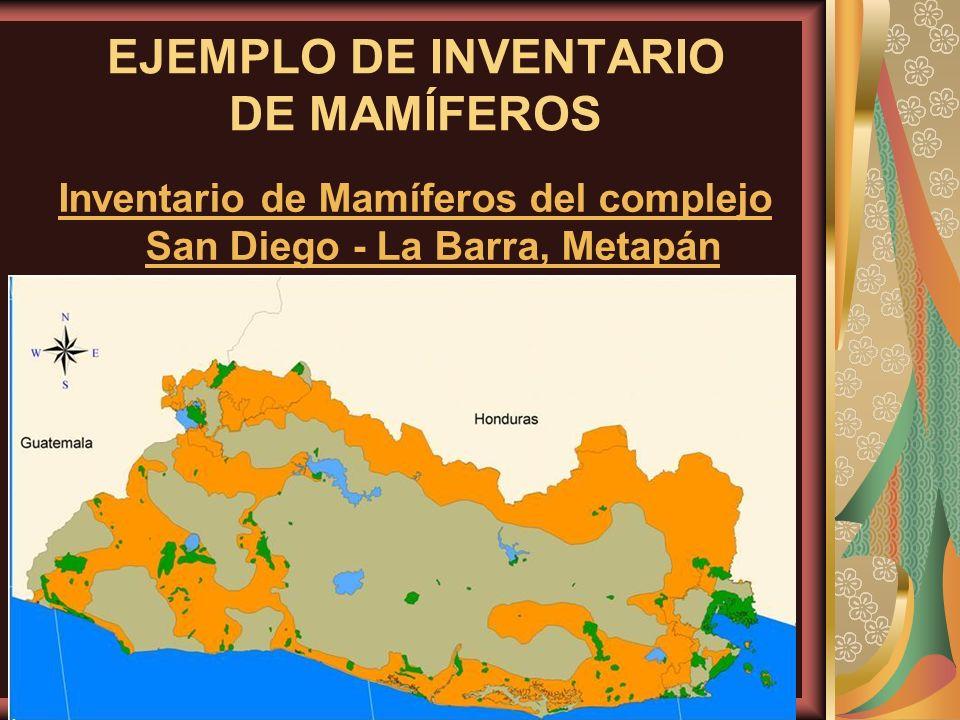 EJEMPLO DE INVENTARIO DE MAMÍFEROS Inventario de Mamíferos del complejo San Diego - La Barra, Metapán
