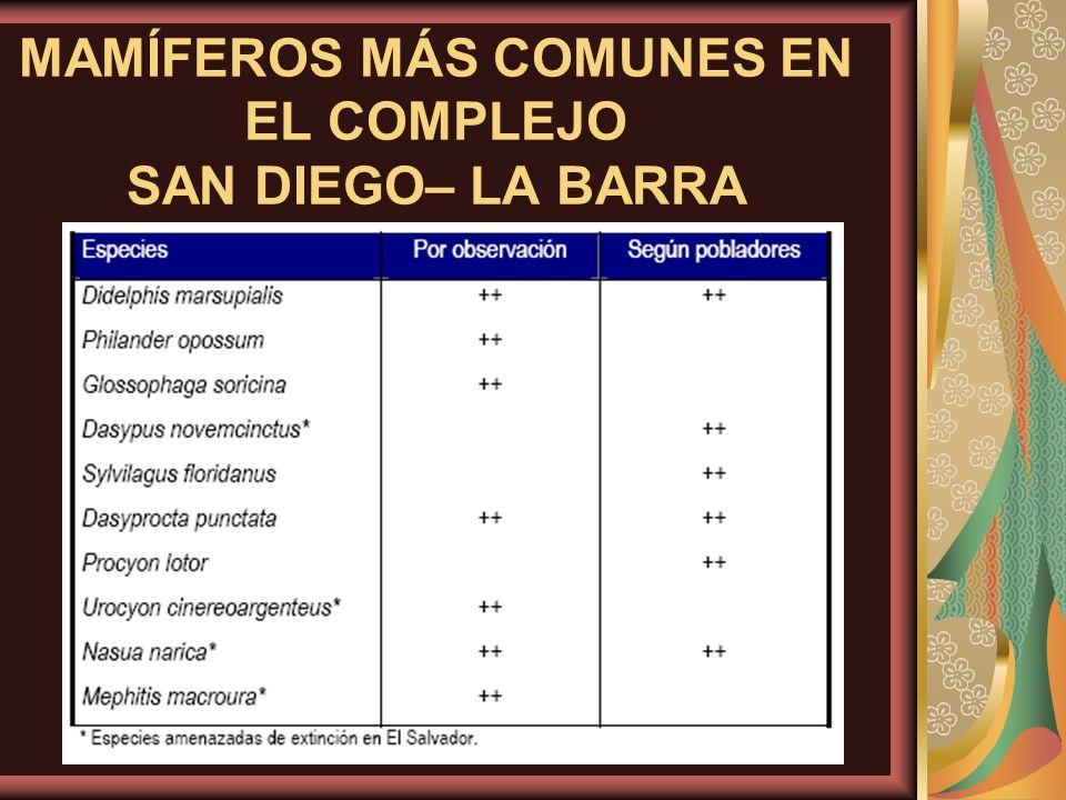 MAMÍFEROS MÁS COMUNES EN EL COMPLEJO SAN DIEGO– LA BARRA