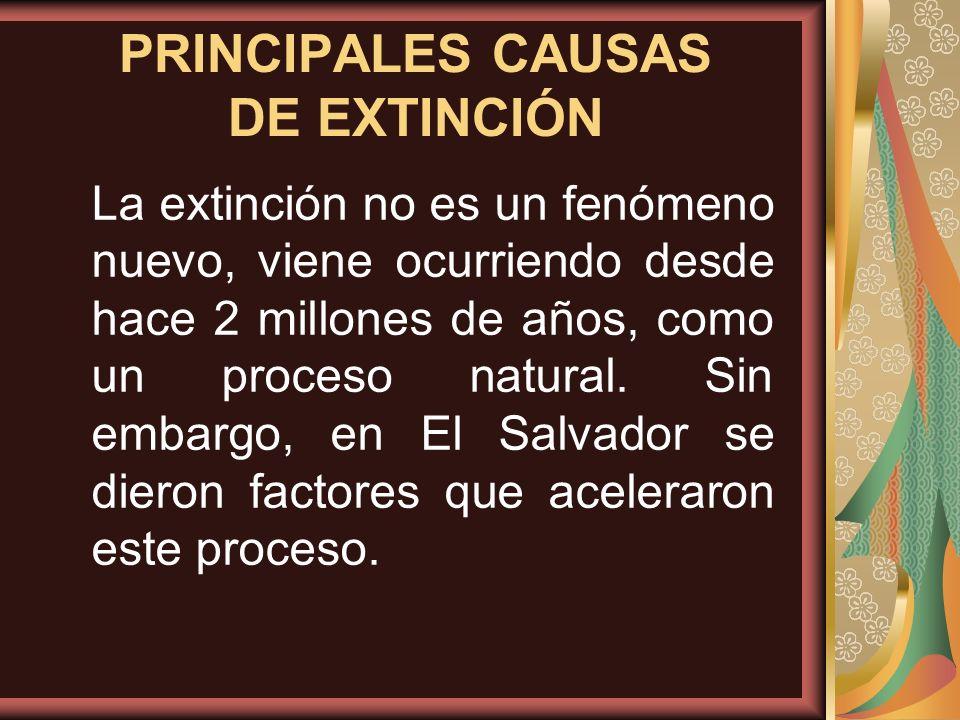 PRINCIPALES CAUSAS DE EXTINCIÓN La extinción no es un fenómeno nuevo, viene ocurriendo desde hace 2 millones de años, como un proceso natural. Sin emb