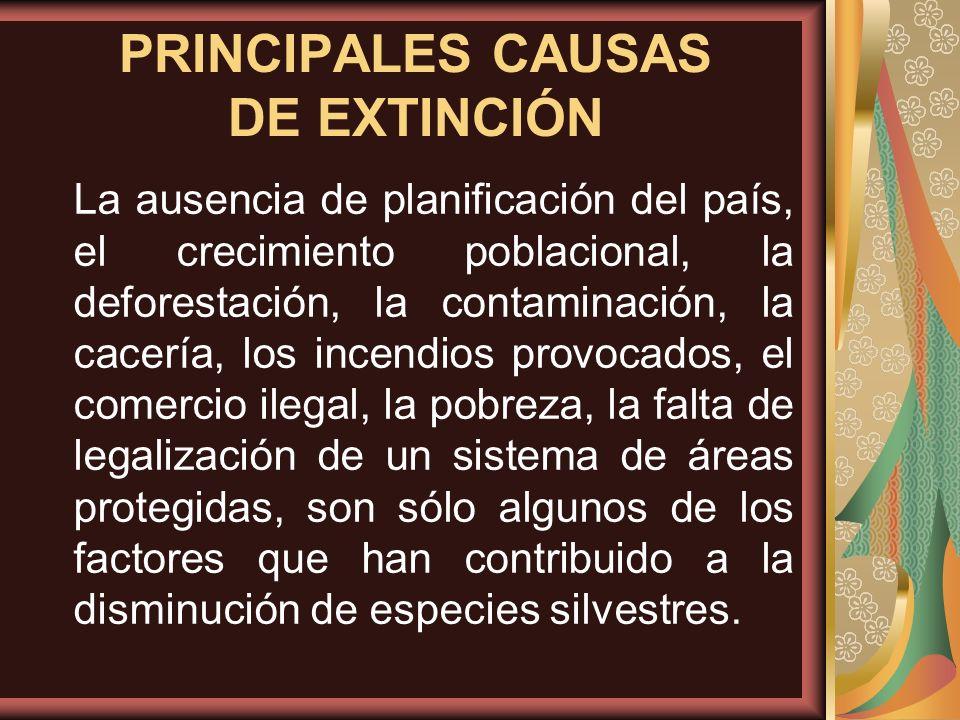 La ausencia de planificación del país, el crecimiento poblacional, la deforestación, la contaminación, la cacería, los incendios provocados, el comerc