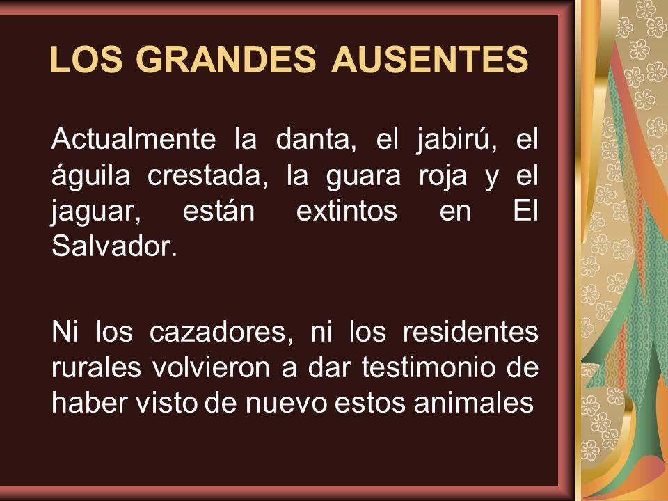 LOS GRANDES AUSENTES Actualmente la danta, el jabirú, el águila crestada, la guara roja y el jaguar, están extintos en El Salvador. Ni los cazadores,