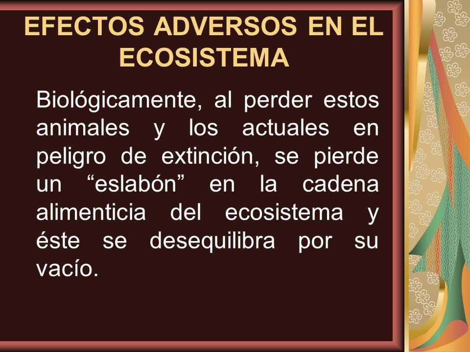 Biológicamente, al perder estos animales y los actuales en peligro de extinción, se pierde un eslabón en la cadena alimenticia del ecosistema y éste s