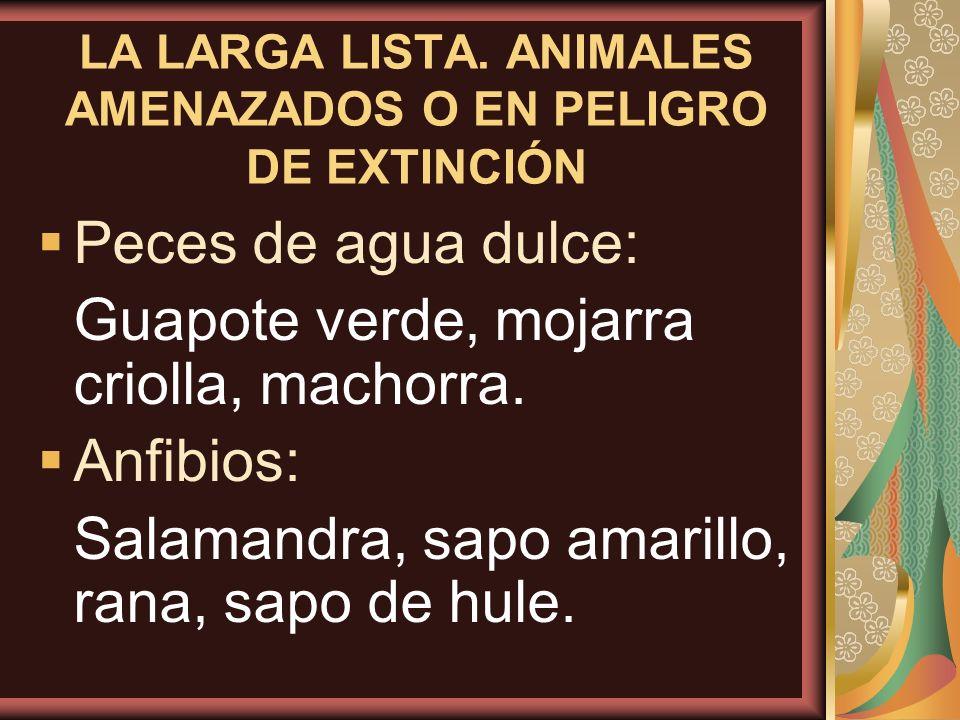 LA LARGA LISTA. ANIMALES AMENAZADOS O EN PELIGRO DE EXTINCIÓN Peces de agua dulce: Guapote verde, mojarra criolla, machorra. Anfibios: Salamandra, sap