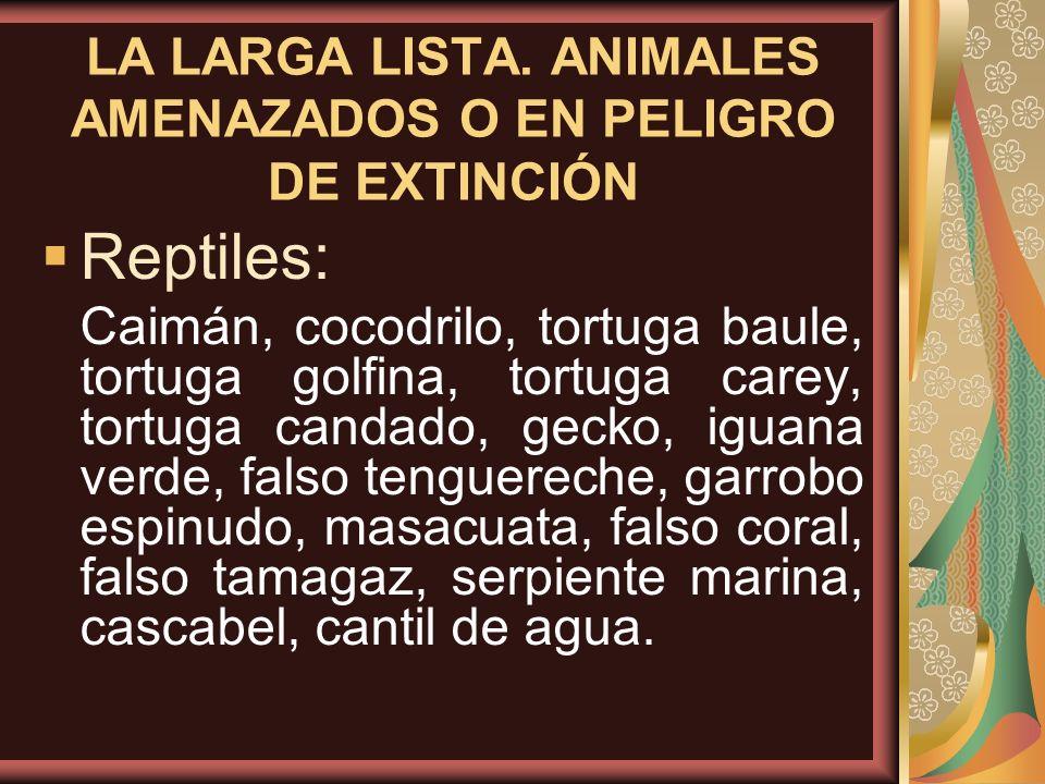 LA LARGA LISTA. ANIMALES AMENAZADOS O EN PELIGRO DE EXTINCIÓN Reptiles: Caimán, cocodrilo, tortuga baule, tortuga golfina, tortuga carey, tortuga cand