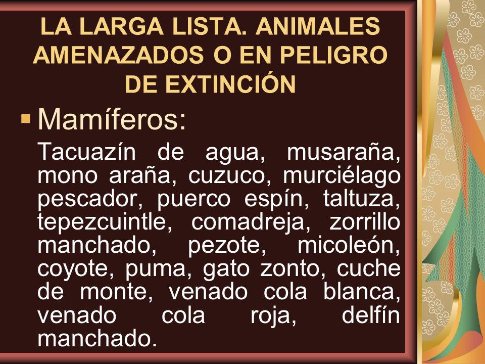 LA LARGA LISTA. ANIMALES AMENAZADOS O EN PELIGRO DE EXTINCIÓN Mamíferos: Tacuazín de agua, musaraña, mono araña, cuzuco, murciélago pescador, puerco e
