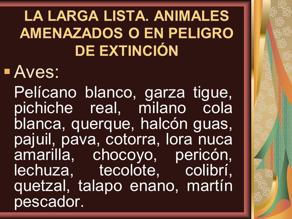 LA LARGA LISTA. ANIMALES AMENAZADOS O EN PELIGRO DE EXTINCIÓN Aves: Pelícano blanco, garza tigue, pichiche real, milano cola blanca, querque, halcón g