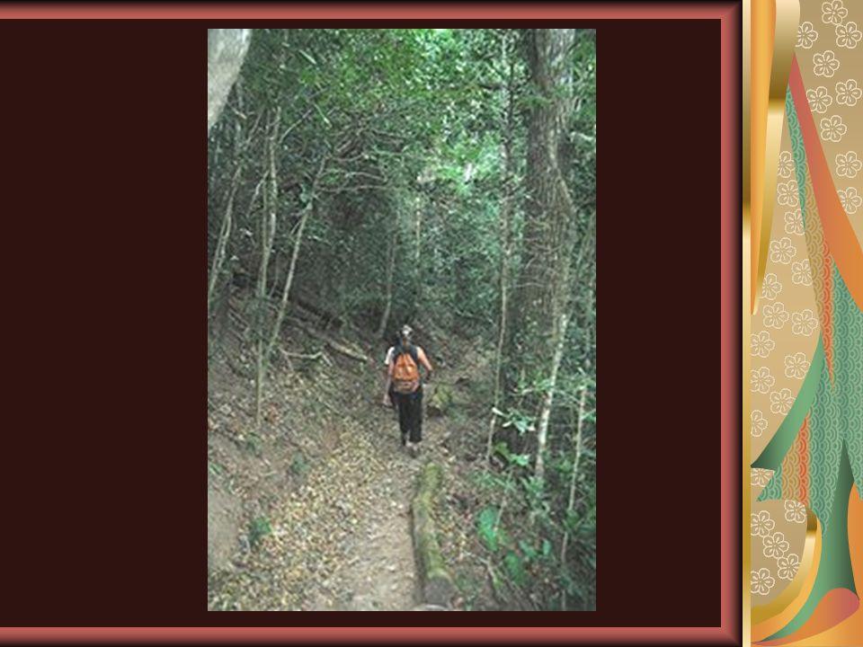 El jabirú se cree que se extinguió a principios de siglo.