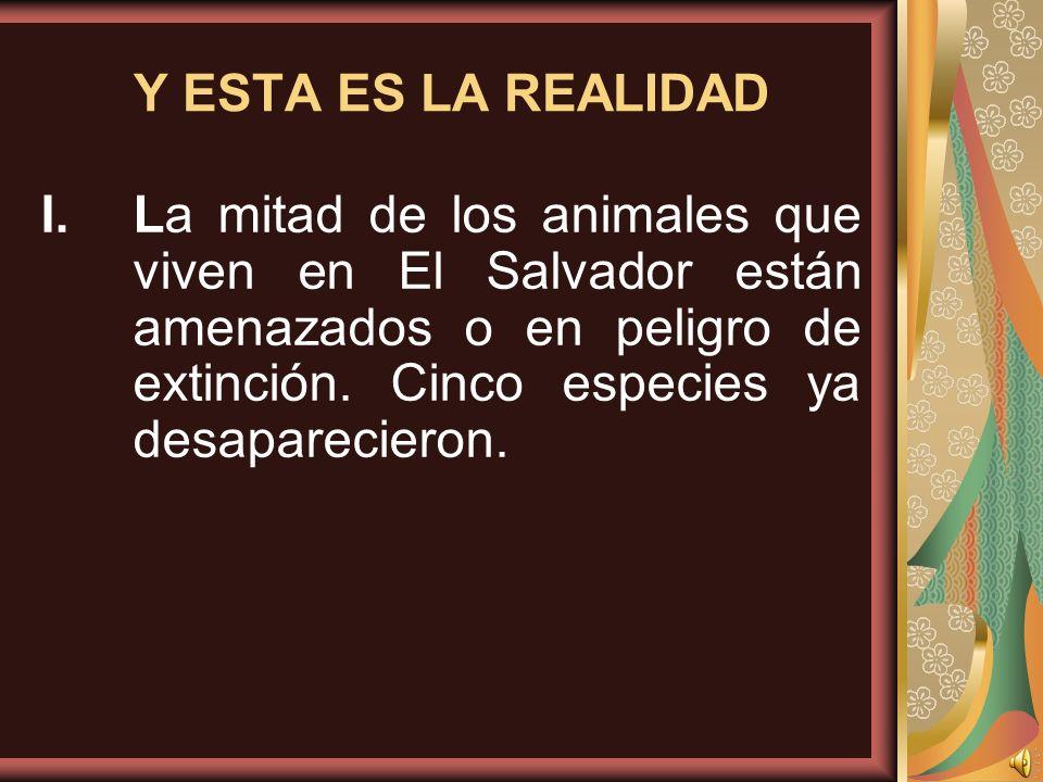 Y ESTA ES LA REALIDAD I.La mitad de los animales que viven en El Salvador están amenazados o en peligro de extinción. Cinco especies ya desaparecieron