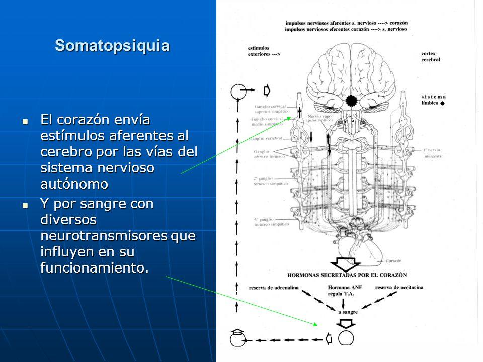 Somatopsiquia El corazón envía estímulos aferentes al cerebro por las vías del sistema nervioso autónomo El corazón envía estímulos aferentes al cereb