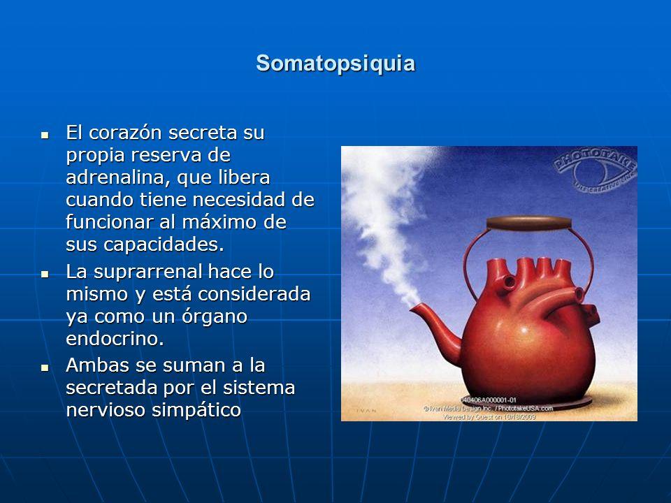 Somatopsiquia El corazón secreta su propia reserva de adrenalina, que libera cuando tiene necesidad de funcionar al máximo de sus capacidades. El cora